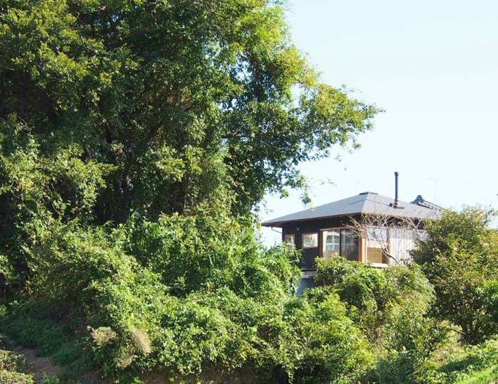 森と平屋の家